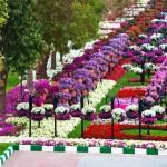 Райските градини на Ал Аин1 (21)