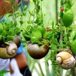 миниатюрна градина (10)