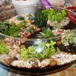миниатюрна градина (8)