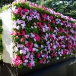 Впечатляващи вертикални градини (12)