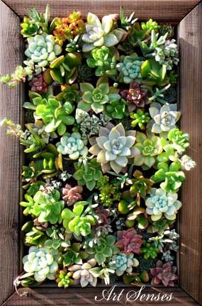 вертикална градина-пано