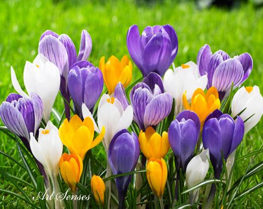 Красива пролетна градина на малка площ
