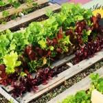 Зеленчукова градина в палети
