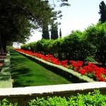 Бахайските градини (5)