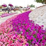 Райските градини на Ал Аин1 (11)