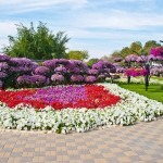 Райските градини на Ал Аин1 (13)