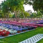 Райските градини на Ал Аин1 (16)