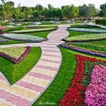 Райските градини на Ал Аин1 (17)