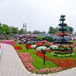 Райските градини на Ал Аин1 (18)
