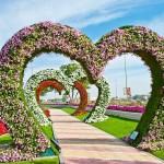 Райските градини на Ал Аин1 (19)