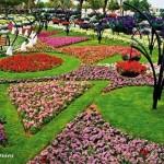 Райските градини на Ал Аин1 (2)