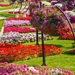 Райските градини на Ал Аин1 (5)