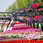 Райските градини на Ал Аин1 (6)