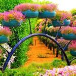 Райските градини на Ал Аин1 (8)