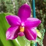 Грижи за орхидеята-светлина и пресаждане