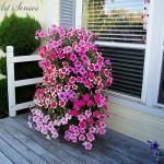 Вертикална градинка от петунии за дома
