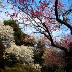 Великите японски градини - Кайраку-ен (2)
