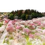 Великите японски градини - Кайраку-ен (3)