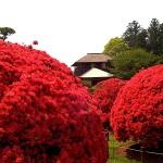 Великите японски градини - Кайраку-ен (4)