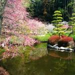 Великите японски градини - Кайраку-ен (7)