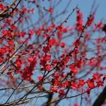Великите японски градини - Кайраку-ен (8)