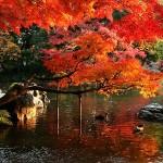 Великите японски градини - Кораку-ен (2)