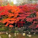 Великите японски градини - Кораку-ен (8)