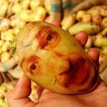 Картофени портрети - изумителна артистична творба