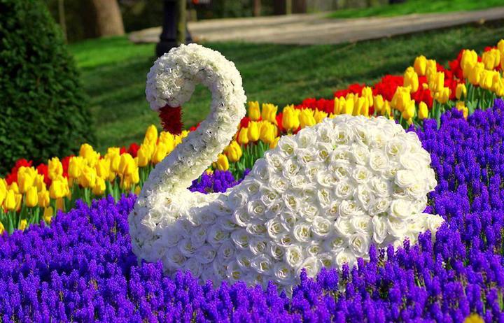 Лебед от рози