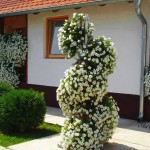 Красива веранда с бели петунии