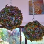 Направи си топка от растения