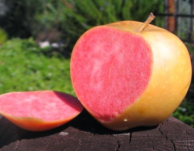 Ябълки Розова перла
