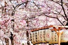 Пролет в Япония (12)