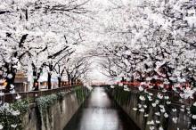 Пролет в Япония (2)