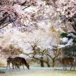 Пролет в Япония (6)