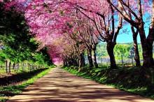 Пролет в Япония (7)