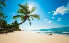 Карибите (1)