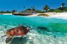 Карибите (15)