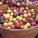 Картофите -  наследство от Инките